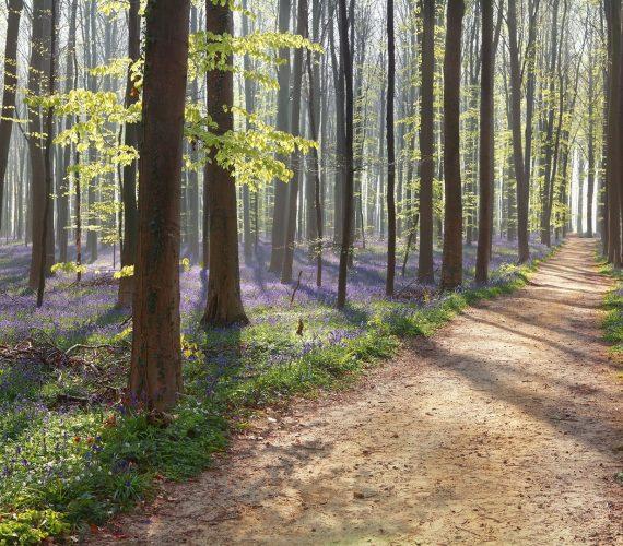 hiking-path-in-spring-flowering-forest-P3NR49U